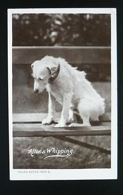 "Real Photo Postcard 1908 Dog ""After A Whipping"""
