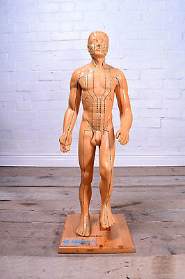 Anatomical Acupuncture Anatomy Model Male Torso Educational Medical