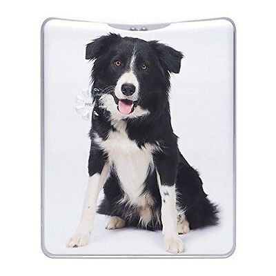 Border Collie Ultrabright Personal Torch - MT1