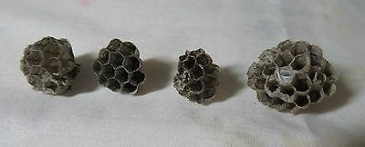 Ohio Honeycomb Paper Red Wasp Nest Taxidermy Science LOT OF 4