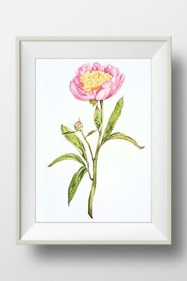 Pink Peony - Watercolour Painting A4 Print (Direct from Artist)
