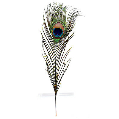 "Pack of 12 Peacock Feathers Approx 10"" to 12"" Inches Natural Peacock Eye F G3Q8"