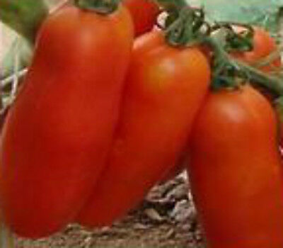Tomato RAMS HORN HERITAGE HEIRLOOM  unusual long roma type tomato 25 seeds