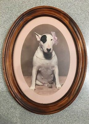 Original Framed Photograph of Female Bull Terrier Wearing Pearls and a Pink Bow