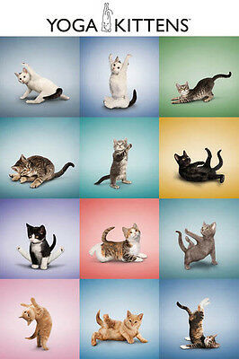 """KITTENS IN YOGA POSES - CUTE CATS - 91 x 61 MM 36 x 24"""" ANIMAL POSTER"""