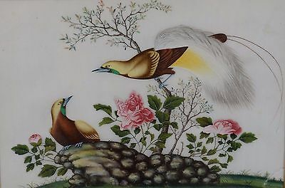 Fine Antique Chinese Rice Pith Paper Painting Two Birds of Paradise
