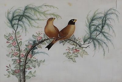 Fine Antique Chinese Rice Pith Paper Painting Two finches