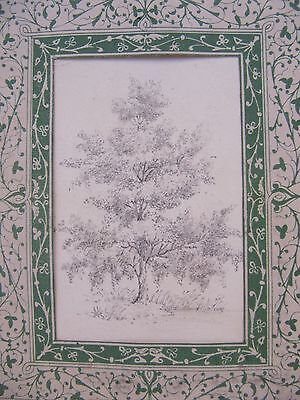 19th CENTURY, Pencil Drawing, STUDY OF A TREE, with printed paper border
