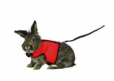 ASOCEA Soft Harness with Lead for Bunny Kitten Guinea Pig & Small Animals Red