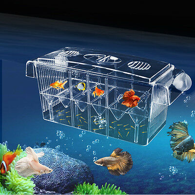 Fish Breeding Mini Aquarium Box Tank Isolation Incubator Hatchery Young Breeder