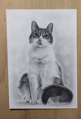 Cat portrait, Custom Drawing Portrait from photo, Oil on paper, Draw my Pet