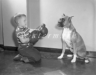 "1946 BOXERS Boxing Photo NEGATIVE 4""×5"" 1940s Dog Pet Kid IOWA Americana Sports"