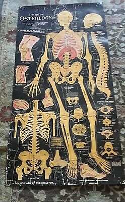 Vintage 1920 DR. G.H. MICHEL & Co. CHART OF OSTEOLOGY VIEW OF SKELETON