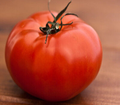TOMATO Siberian 25 seeds  great for cooler climates tasty medium size fruit