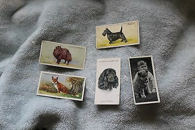 Assorted dog cigarette trade cards set of 5, Players, Wills, Carreras Ltd.