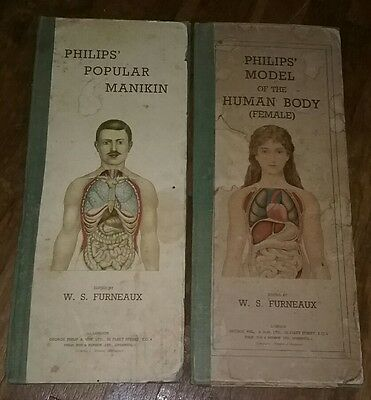 "Rare Pair 1899 PHILIPS MODEL OF HUMAN BODY Female & Male W.S. FURNEAUX 18"" Tall!"