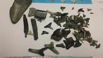 50+ Lot SHARK TEETH FOSSILS SCHOOL GUIDES LITERATURE