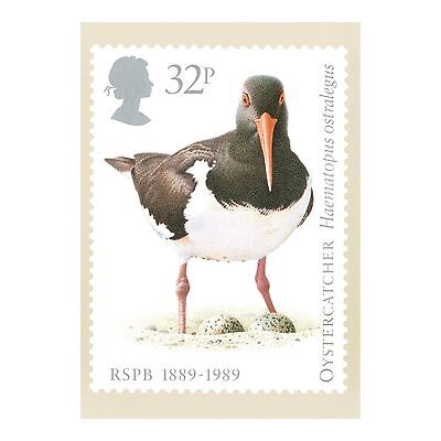Oystercatcher - Common Pied Oystercatcher Rspb Birds Royal Mail Phq 115 Postcard