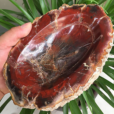 1535g Natural Petrified Wood Fossil Crystal Ashtray From Madagascar 72703