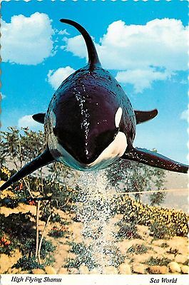 High Flying Shamu Sea World San Diego CA Aurora OH Orlando FL Postcard