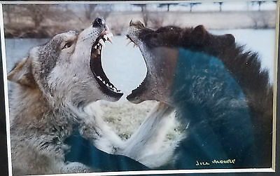 """Wolves Photo """"Title Kiri & Socrates Jaw Sparring"""" by Jill Moore"""