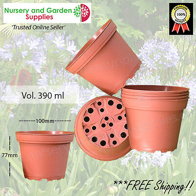 100mm Plant Squat Pot T/C - Cactus, Succulents, herbs, garden, nursery