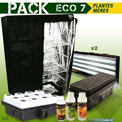 Pack Box Plantes Meres - Boutures Eco 7