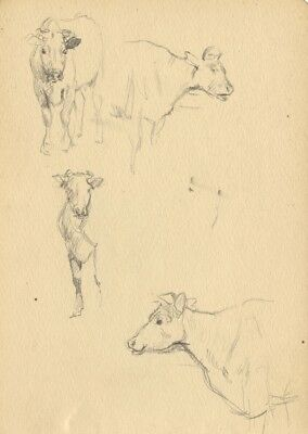 Cow Animal Studies - Original late 19th-century graphite drawing