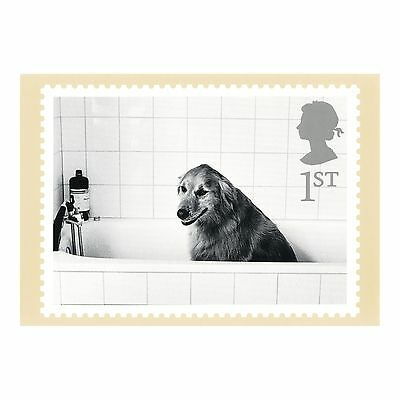 ELLIOTT ERWITT PHOTOGRAPHER - DOG IN BATH - CATS and  DOGS PHQ 228 POSTCARD