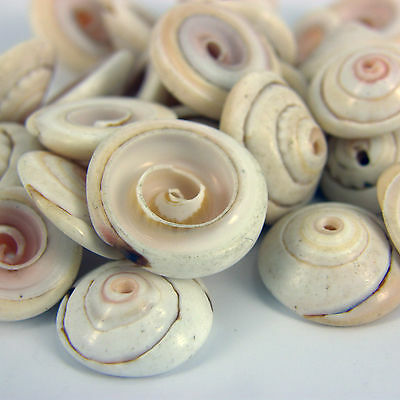 25 x Drilled Pretty Craft Shells Seashells for craft & Beads Jewellery SH5