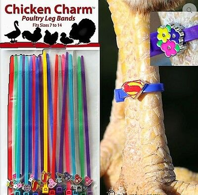 leg rings-leg bands poultry CHICKEN CHARM (pkt 20) PLUS 6 extra bands