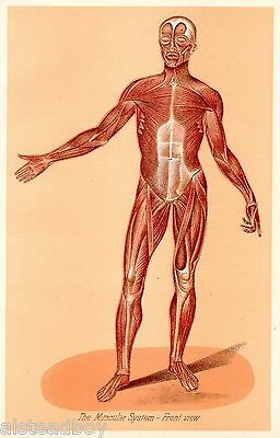 ANT Doctor Physician Medical Body Muscles Health Interest Framable Plate