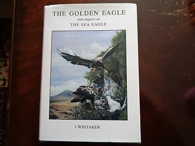 the golden eagle and the sea eagle j whitaker ornithology birdwatching