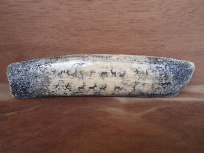 Eskimo Inuit Pictograph Scrimshaw fossil Taxidermy Artifact Skull