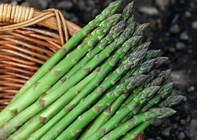 Rare vegetable seeds Green Asparagus Survival Organic Heirloom NON-GMO