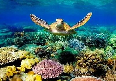 Voucher for 2 for great barrier reef snorkel dibe port douglas boat cruise