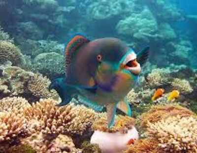 Voucher for 2 for great barrier reef port douglas snorkel boat cruise