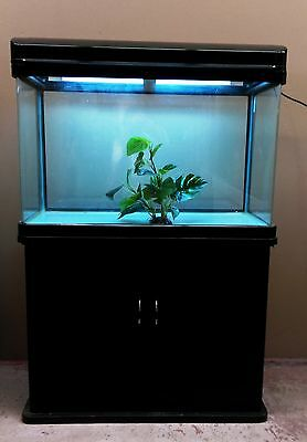 15% OFF 2.8ft Curved Glass Fish Tank, Cabinet and hood  Complete Set