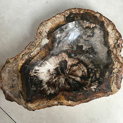 3710g Natural Petrified Wood Fossil Crystal Ashtray From Madagascar 05