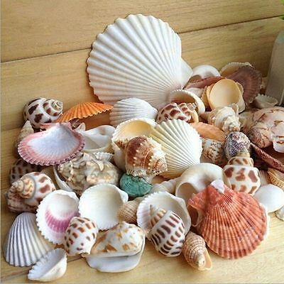 100g Mixed Beach SeaShells Mix Sea Shell Craft SeaShell Natural Aquarium Decor~*