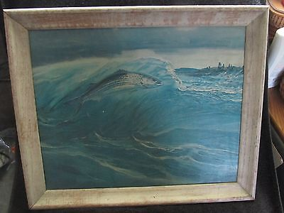 "Vintage ""Striped Bass"" Canvas Print - Seagram Collection by W. Goadby Lawrence"