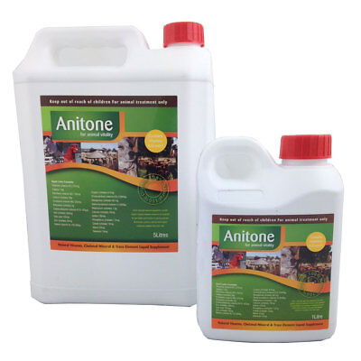 Anitone 1Lt Horse And Equestrian