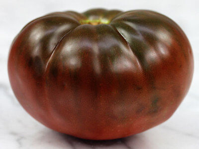 Organic Non-GMO Vegetable True Black Brandywine Heirloom Tomato 25 Seeds