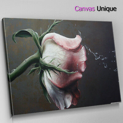 SC261 WILTING PINK Rose Scenic Wall Art Picture Large Canvas Print ...