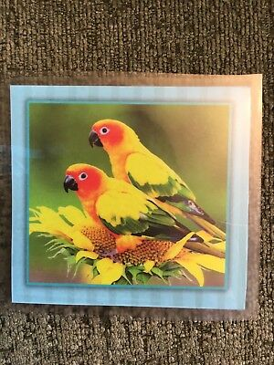 Parakeets Laminated Maganet for Fridge, File Cabinet, etc.