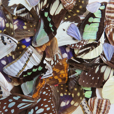 LOTS 50  REAL BUTTERFLY wing jewelry butterfly material ooak fairy DIY artwork