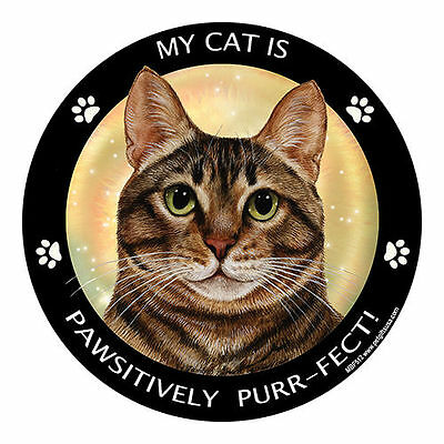 My Brown Tabby Cat Is My Best Friend Dog Car Magnet