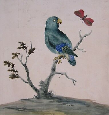 19th CENTURY, Watercolour, STUDY OF A PARROT AND BUTTERFLY