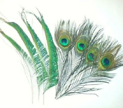 Mixed Peacock Eye Feathers and Peacock Fan Feathers 10-12 inches  25-30cm
