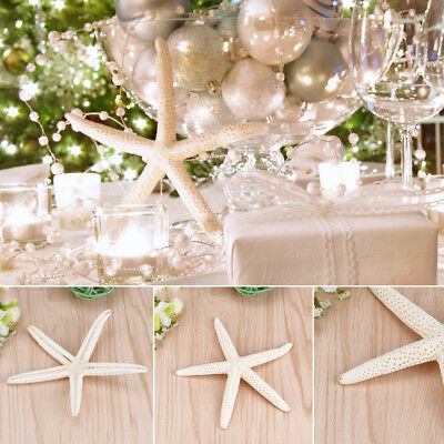 Fashion Natural 10cm Starfish DIY Crafts Home Decoration Landscape Sea Star